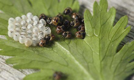 Entomologi – Hvad er det?