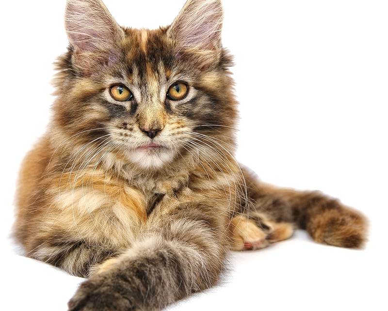 Kattens verden er din online ven der ved alt om katte