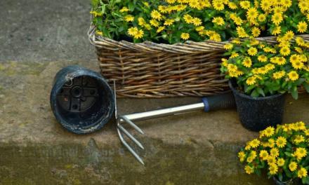 Opgradér din have, og brug mere tid derude