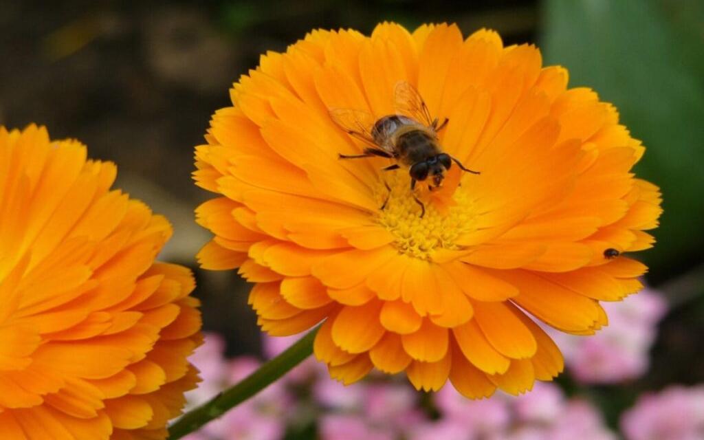 Giv insekterne gode forhold i din have