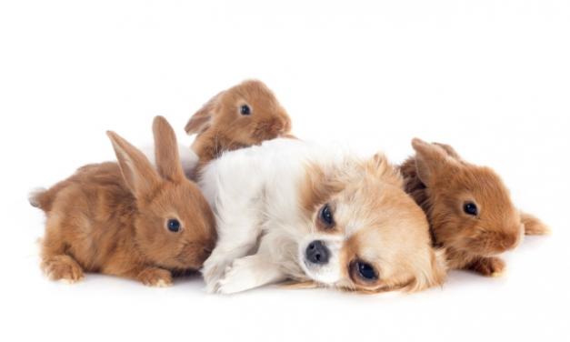 Kan kaniner med hund og kat?